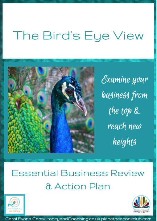 The Birds Eye View - The Essential Business Review from Carol Evans, Consultancy and Coaching